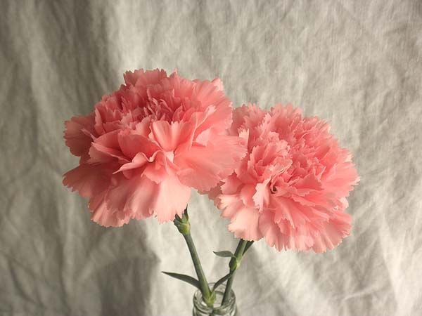 20130406部屋花