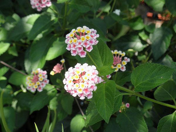 20130819花①
