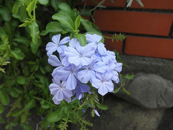 20130822花