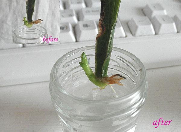 20130901新しい芽