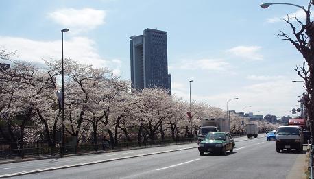 飯田橋桜2