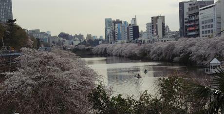 飯田橋桜1