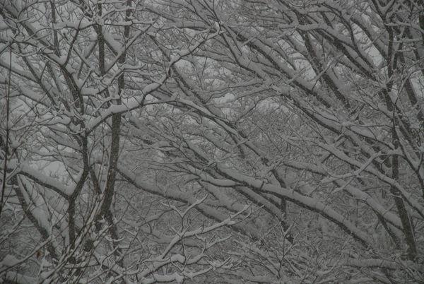 降り積もる雪21