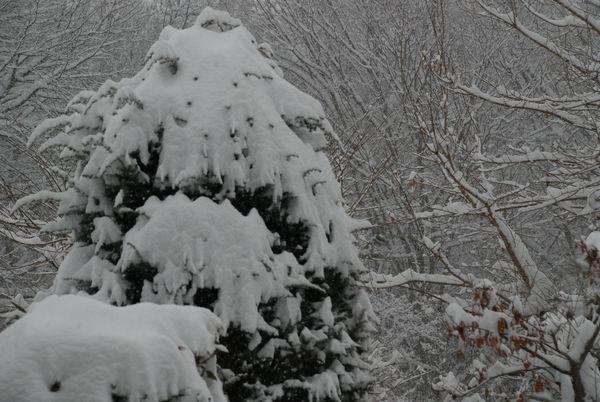 降り積もる雪23