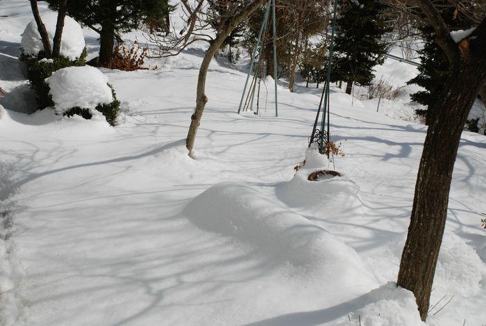 雪・庭の景色1