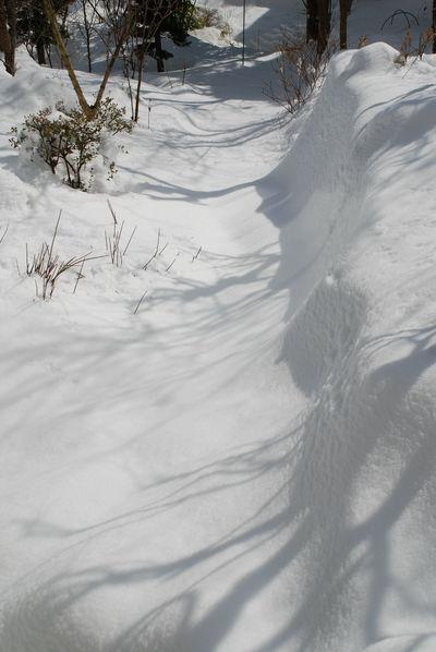 雪・庭の景色3