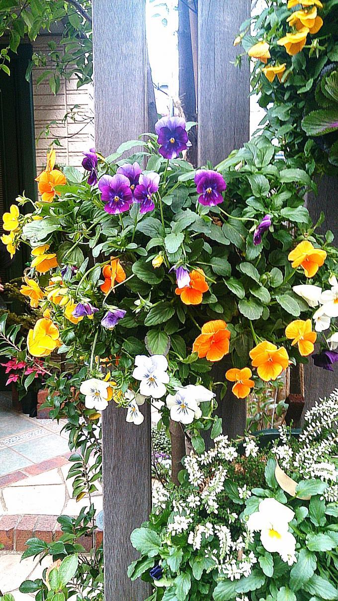 Flower_20140103