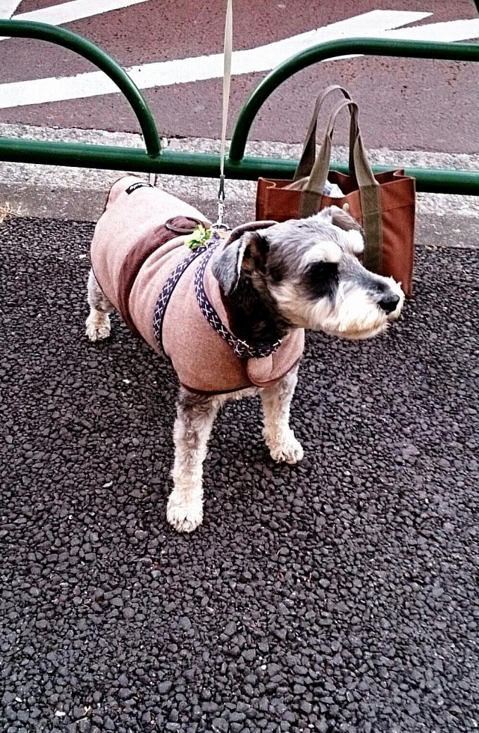 DOG_20140110