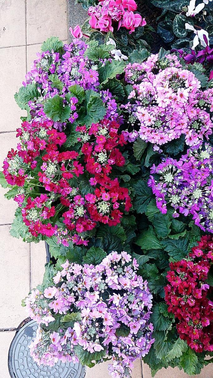Flower_20140114