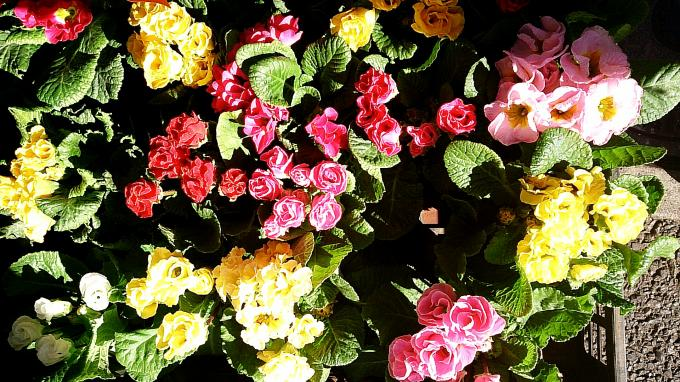Flower_20140123