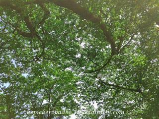 green2013-5-10.jpg