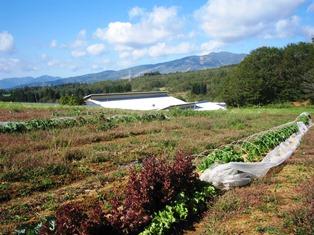 菜園の景色