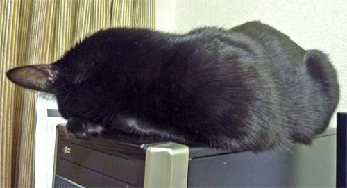 タワーPCの上の猫