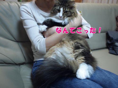 ashige10_text.jpg