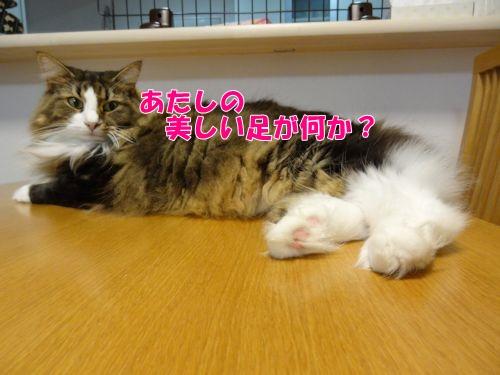 ashige3_text.jpg