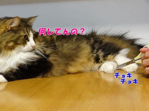 ashige4_text.jpg