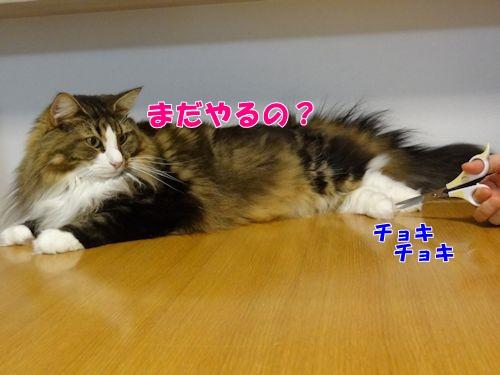 ashige6_text.jpg