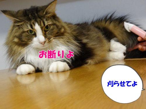 ashige8_text.jpg