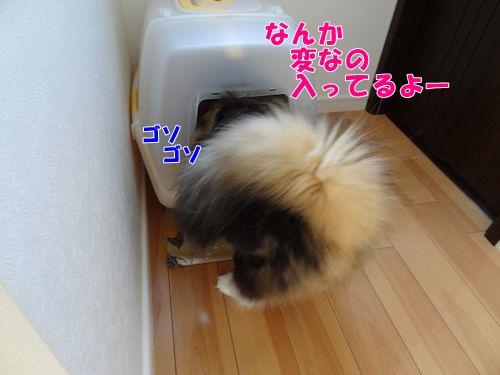 newsuna4_text.jpg
