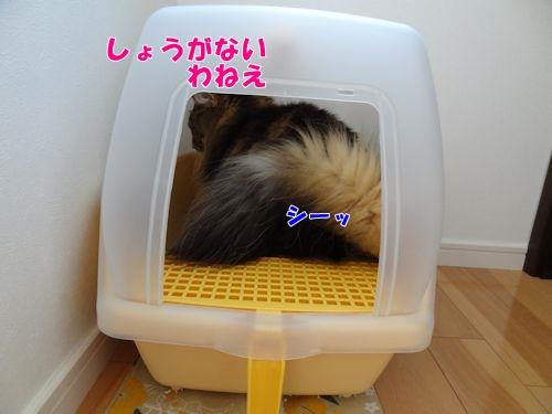 newsuna5_text.jpg
