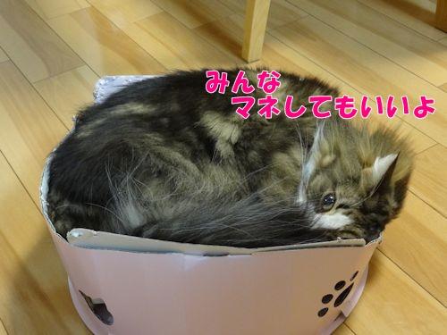 tukaikata9_text.jpg