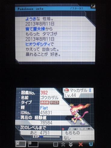 No392 ★ゴウカザル-2