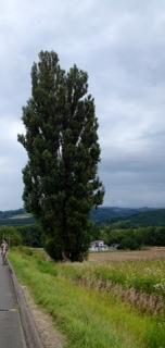 ケンとメリーの木2