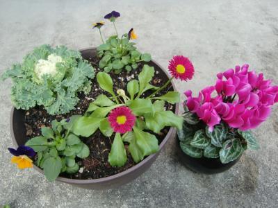 2013冬寄せ植え1