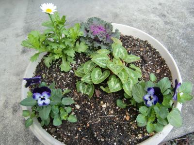 2013冬寄せ植え2