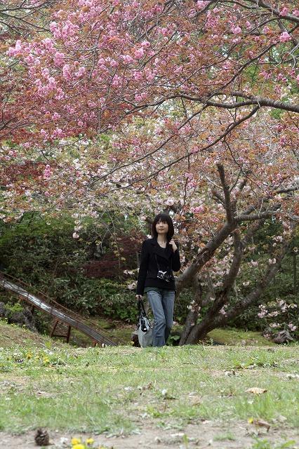 八重桜13.5.26p2