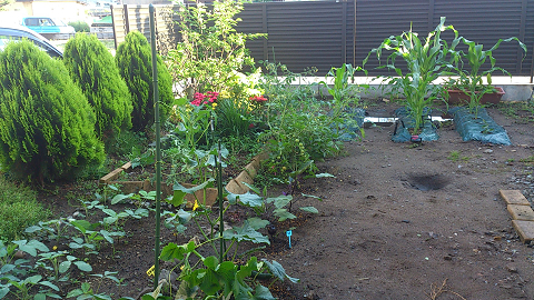 20136月時点の庭
