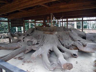 御神木の根っこ