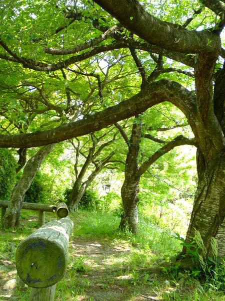 立田山の緑。