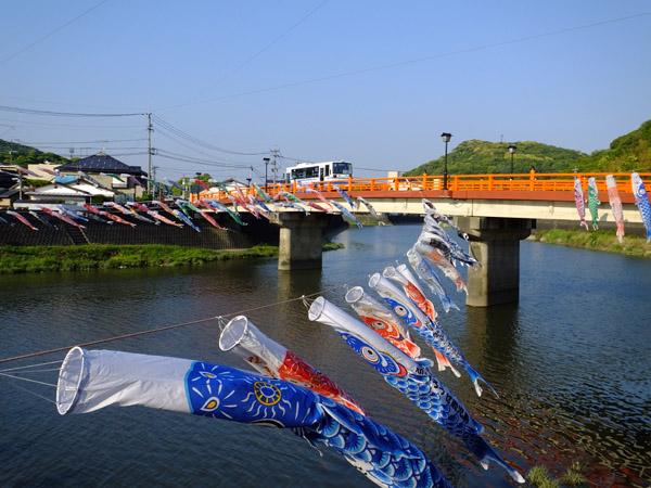 高橋の鯉のぼり。