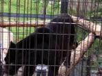 6月21日旭山動物園10