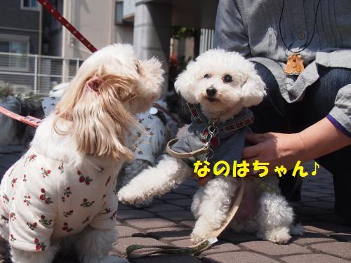 002_convert_20130413224241.jpg