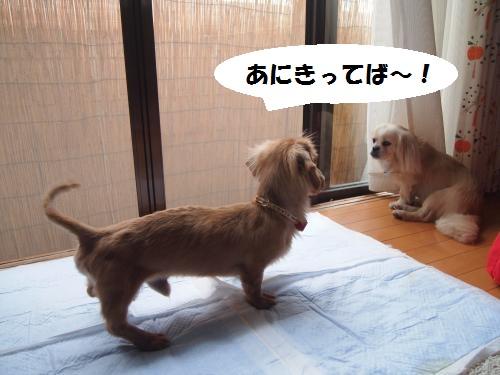 002_convert_20130530232259.jpg