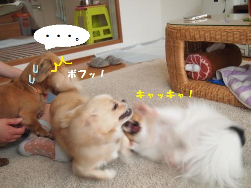 002_convert_20130801133749.jpg