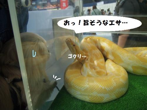 003_convert_20130510172405.jpg