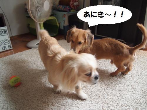 003_convert_20130530232332.jpg