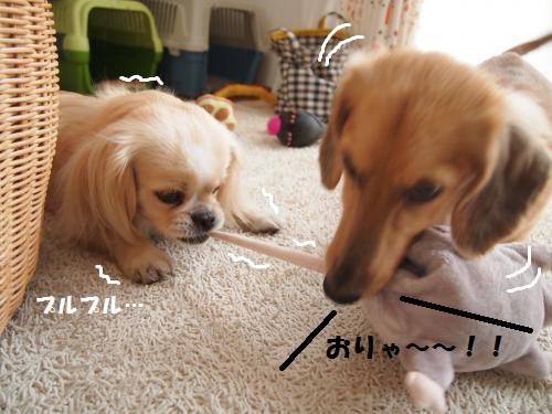 003_convert_20130703221419.jpg