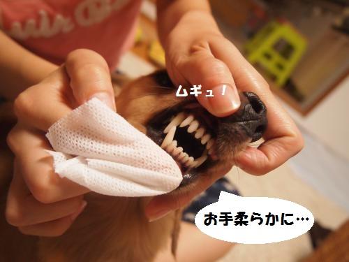 003_convert_20130730214255.jpg