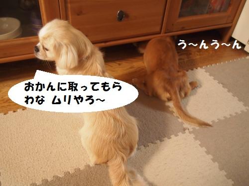 003_convert_20130805225146.jpg