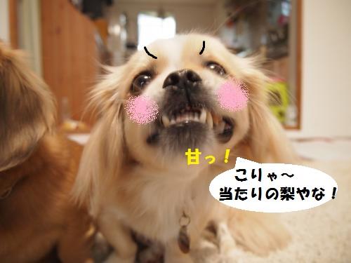 003_convert_20131025211221.jpg