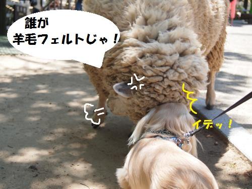 004_convert_20130519163843.jpg