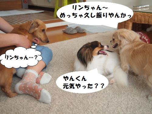 004_convert_20130801133908.jpg