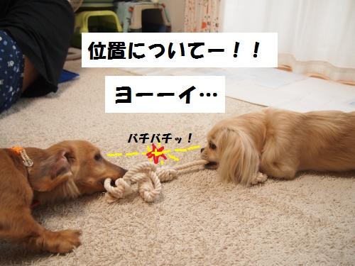 005_convert_20130620215858.jpg