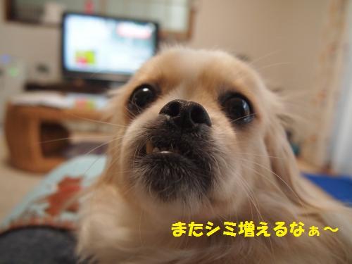 006_convert_20130712234135.jpg