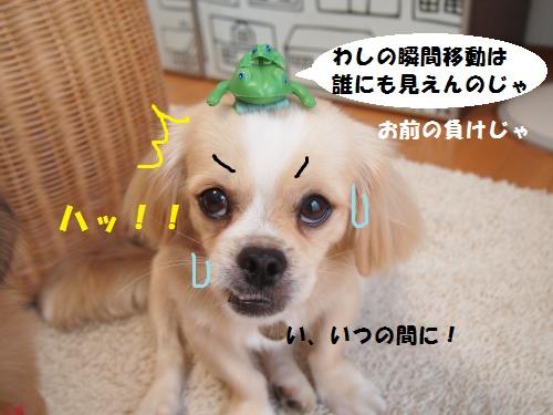 008_convert_20130820215752.jpg