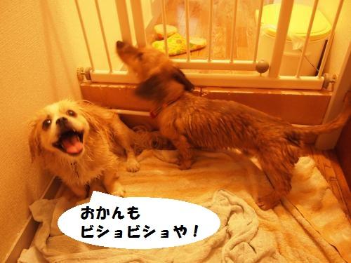 009_convert_20130703221633.jpg